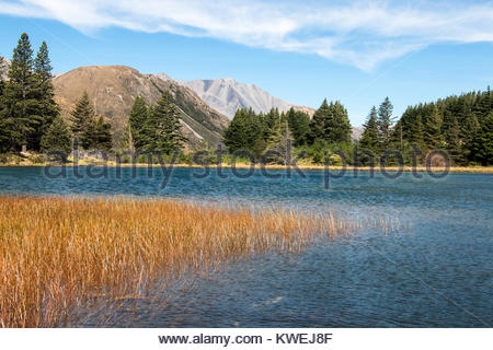 Little pond in high country, Canterbury, New Zealand - Stock Image