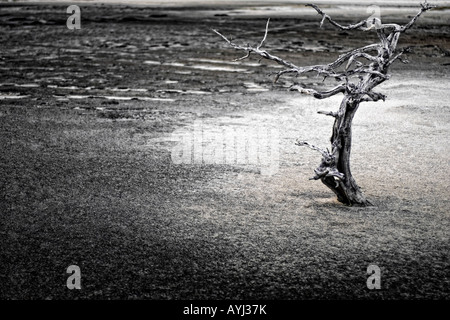 weathered dead tree without leaves on desolate land - Stock Image
