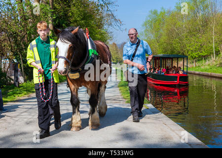 Horse drawn canal boat trip at Llangollen Wharf,Wales, UK. Horse pulling a barge full of people enjoying a narrow boat rip on a sunny day. - Stock Image