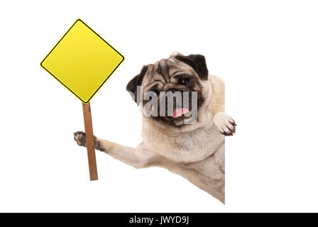 smiling pug puppy dog holding up blank yellow warning, attention sign, isolated on white background - Stock Image