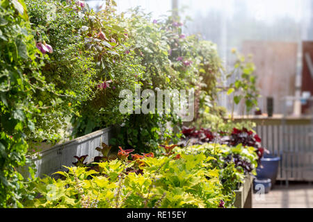 Rows of plants displayed for sale in a summertime garden center - Stock Image