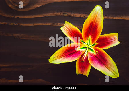 Vibrant Yellow and Orange Lily Flower on Wood Table with Space for Copy - Stock Image
