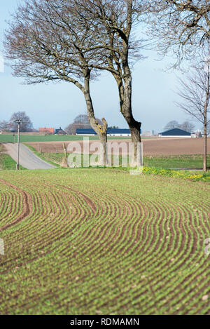 Field at spring - Stock Image