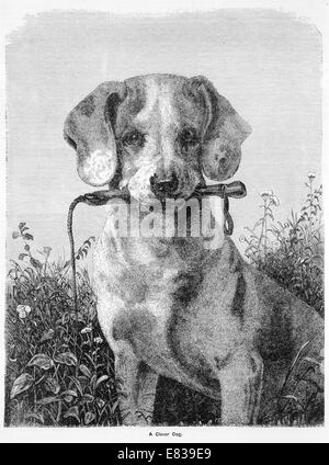 A clever dog circa 1885 - Stock Image