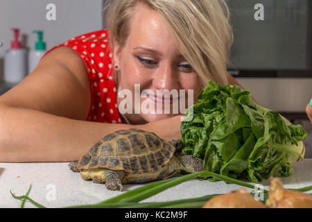 Tortoise eating roman salad while young woman looks at him - Stock Image