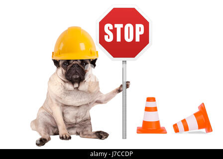 pug dog with yellow constructor safety helmet and red stop sign on pole, isolated on white background - Stock Image