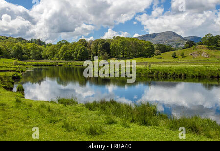 The River Brathay near Birk Rigg Park in the Great Langdale Valley in a sunny May day with clouds reflected in the river - Stock Image