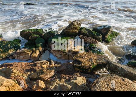 Stones covered with green algae on the Black Sea coast near the village of Fontanka, Ukraine - Stock Image