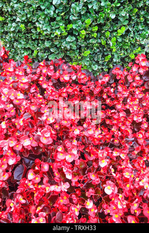Photography with a natural background of red and green plants - Stock Image