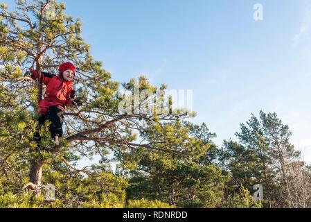 Boy in tree - Stock Image
