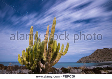 A cactus stands along the edge of the ocean. - Stock Image