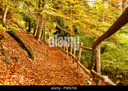 a carpet of leaves on the forest path with wooden fence during the autumn season - Stock Image
