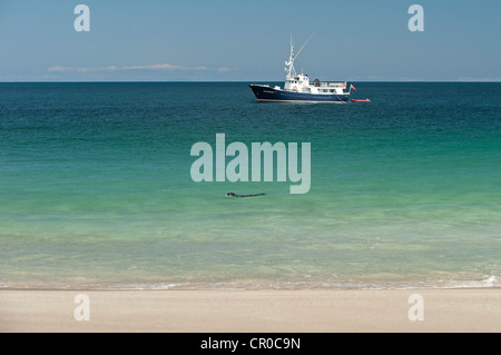 Charter vessel 'Elizabeth G' anchored at the isle of Mingulay in the Western Isles, Scotland, watched by - Stock Image