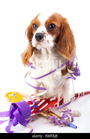 Animal dog pet puppy celebrate new year's eve. Cute king charles spaniel dog in studio. Puppy with trumpet sylvester - Stock Image