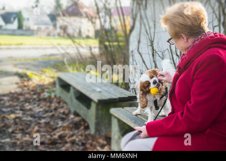 Old woman and her dog playing outside on bench - Stock Image