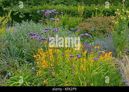 Garden flower border with Verbena Bonariensis, Crocosmia and Verbascum making a colourful display - Stock Image