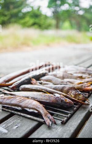 Smoked fish on metal rack - Stock Image