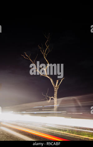 Lone tree surrounded by lights - Stock Image
