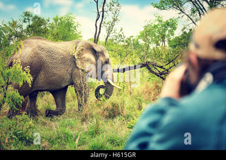Photographer taking pictures of an African elephants, wild animal, safari game drive, Eco travel and tourism - Stock Image