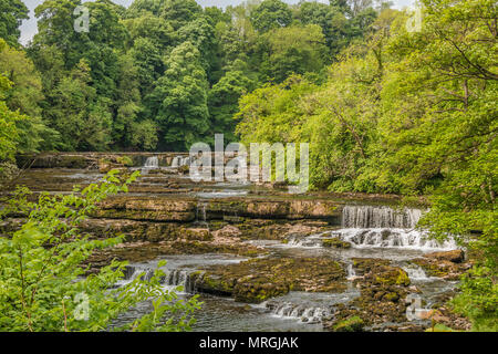Upper Falls, Aysgarth, Wensleydale, Yorkshire Dales National Park, UK in late spring with very low water level - Stock Image