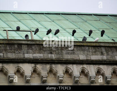 Birds on wire at Chichester Cathedral, West Sussex, England, UK - Stock Image