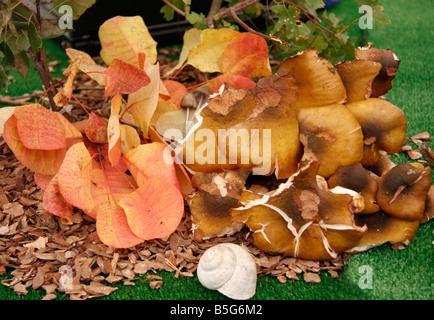 mushroom display at a mushroom festival in Cingoli,Le Marche ,Italy - Stock Image