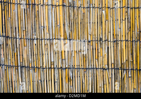 bamboo fencing - Stock Image