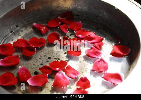 Valentine rose petals - Stock Image