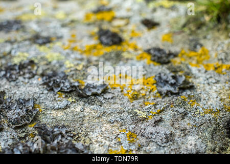 lichens on the stone - Stock Image