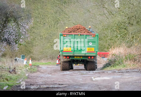 John Deere tractor pulling a large trailer loaded with carrots. - Stock Image