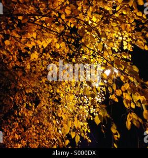 Streetlights and golden yellow leaves - Stock Image
