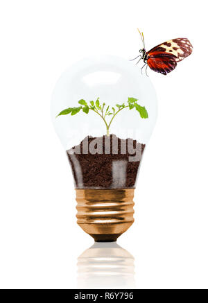 Young seedling growing out of soil inside light bulb with butterfly on outside. Concept of new life or beginning; environmental conservation, ecology  - Stock Image