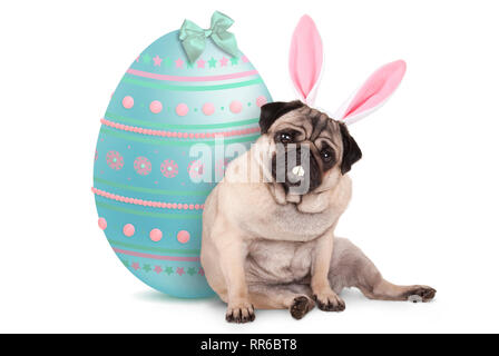 adorable cute pug puppy dog sitting down next to pastel colored easter egg, wearing bunny ears and teeth, isolated on white background - Stock Image