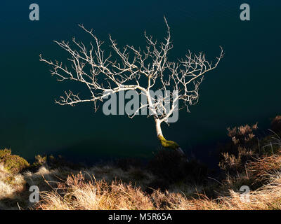 Abstract image of a bare tree in winter on a sunny day with the blue water of Bowscale Tarn behind it. - Stock Image