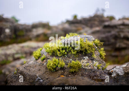 Moss grows on a rock in the Rock Garden in Dullstroom, South Africa - Stock Image