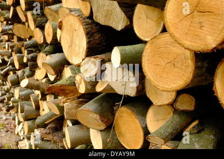 drying firewood stack - Stock Image