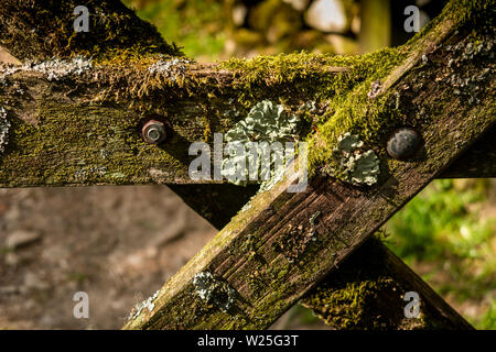 UK, Cumbria, Sedbergh, Settlebeck Gill, lichen and moss covered gate at entrance to Jubilee Woods - Stock Image