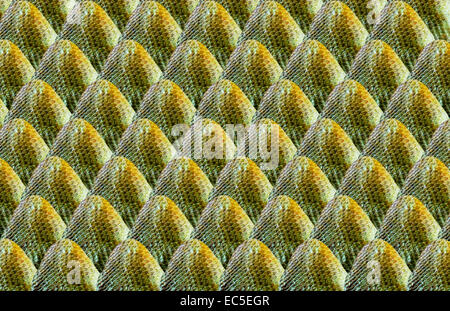 pattern of scales, illustration - Stock Image