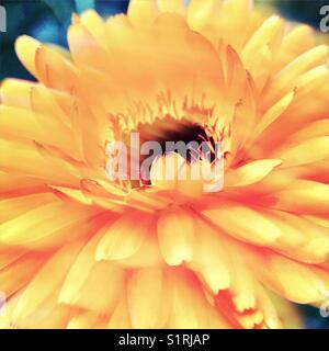 Abstract Flower - Stock Image