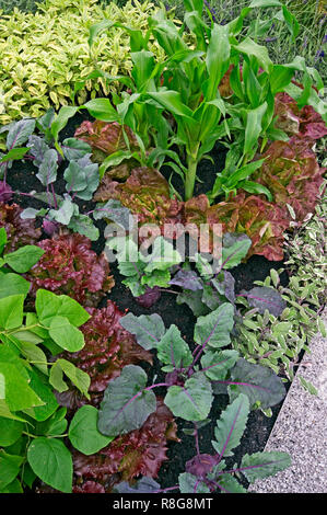 A vegetable border in a flower garden making an unusal display - Stock Image