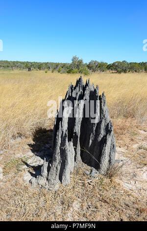 Vertical view of a magnetic termite mound, Cape York Peninsula, Far North Queensland, FNQ, QLD, Australia - Stock Image