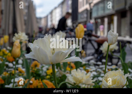 Happy composition, selective focus on white and orange flowers on a street, suggesting a city seeting in the spring time - Stock Image