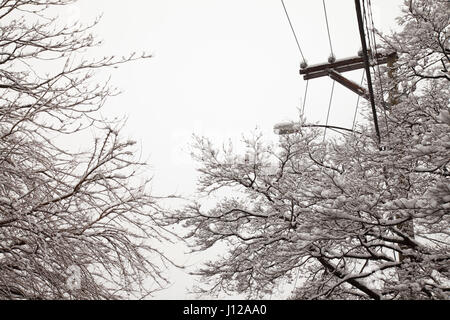 Snow of trees and electrical lines, USA - Stock Image