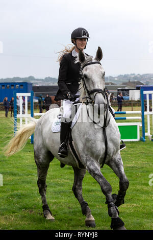 Close up of female show jumper mounted on a grey horse with fence in the background - Stock Image