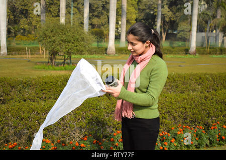 Young woman entomologist collecting insects using an insect net or swiping net for his insect specimen collection in garden field bright summer day. - Stock Image