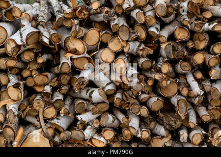 Close-up of a woodpile of birch with birch bark - Stock Image