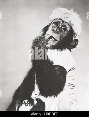Monkey in coonskin cap deep in thought - Stock Image