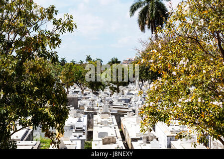 Cristóbal Colón, Havana Cemetery Colon Cemetery now houses the remains of almost as many as there are - Stock Image