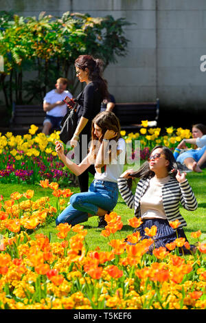 London, England, UK. Young women in Victoria Embankment Gardens, posing for selfies with Spring flowers - Stock Image