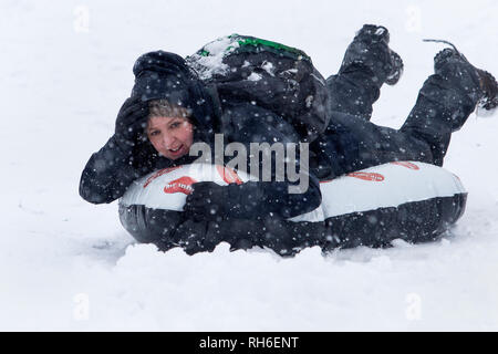 Chippenham, Wiltshire, UK. 1st February, 2019. A woman enjoying the heavy snow is pictured as she rides a sledge in a local park in Chippenham. Credit: Lynchpics/Alamy Live News - Stock Image